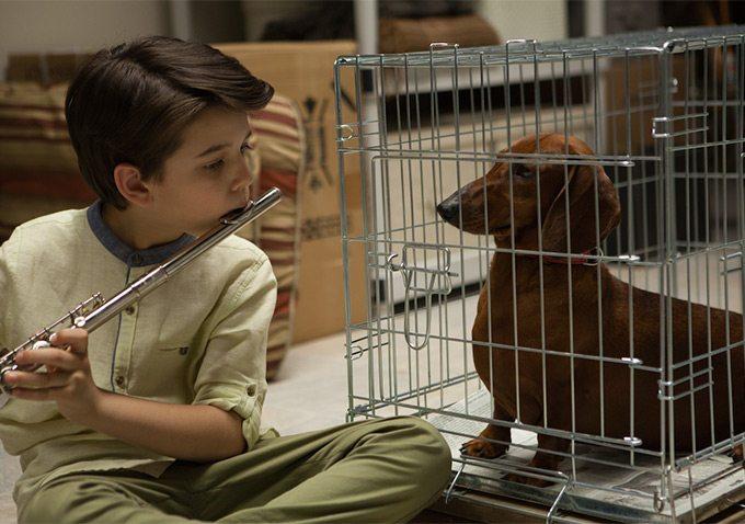 (Wiener-Dog, Annapurna Pictures)